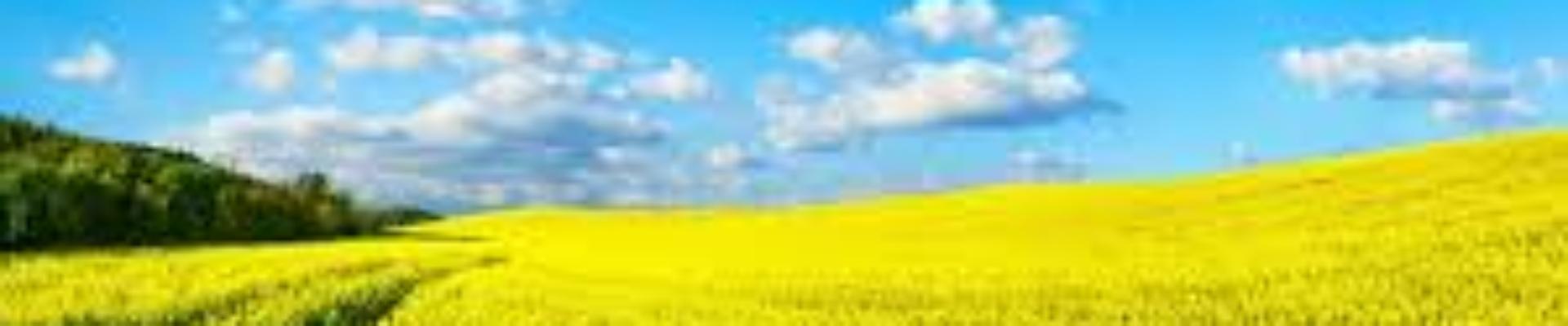 Prairie 1